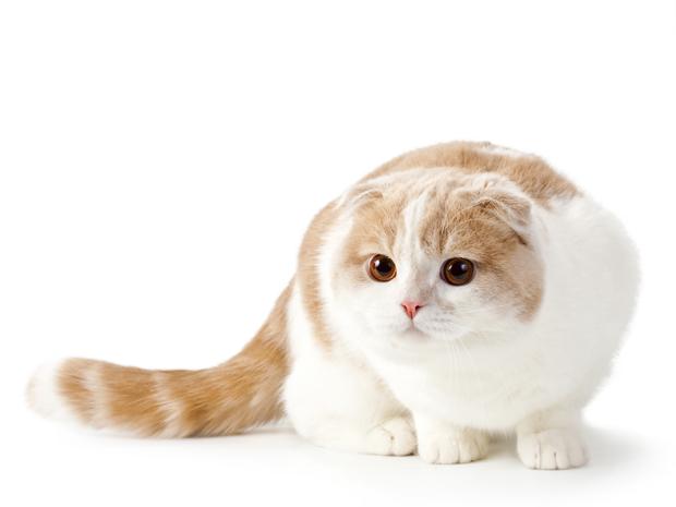 Fd– w układzie Fd_ powoduje zmniejszenie i klapnięciu uszu kota,mentalfloss.com