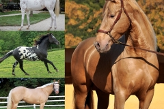 Kurskaya V. : Horse Color Explored: Over 150 Breeds, Types, and Variations