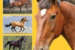 Gower J.: Horse Color Explained: A Breeder's Perspectiv