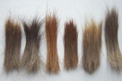 pieczarkowe włosy (kellas-stud.co.uk)