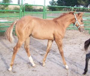brindlestripedhorse