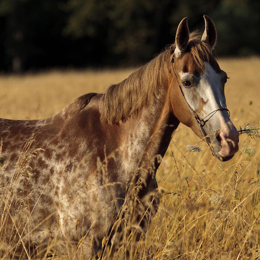 giraffe-horse-d7330-wes-and-dotty-weber