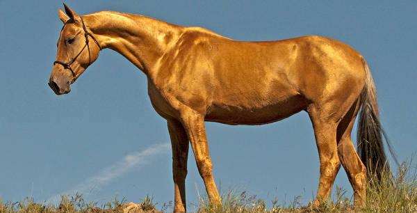 Konie izabelowate były składane na ofiarę w Chinach!
