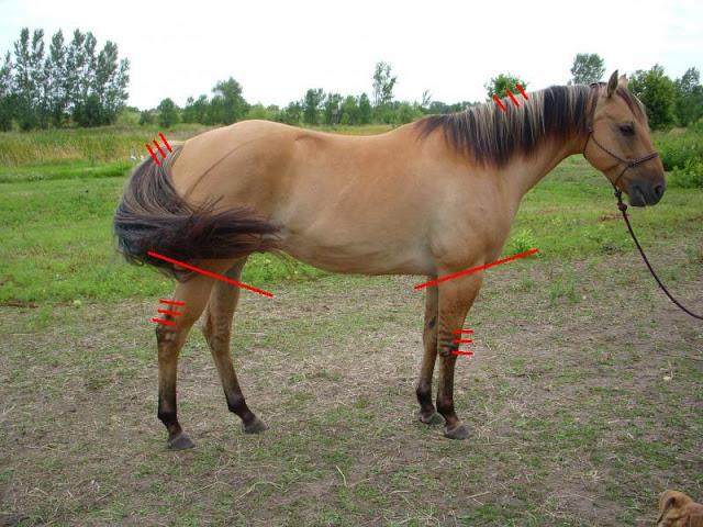 (horseforum.com)