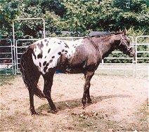 przed (chevalinternational.com)