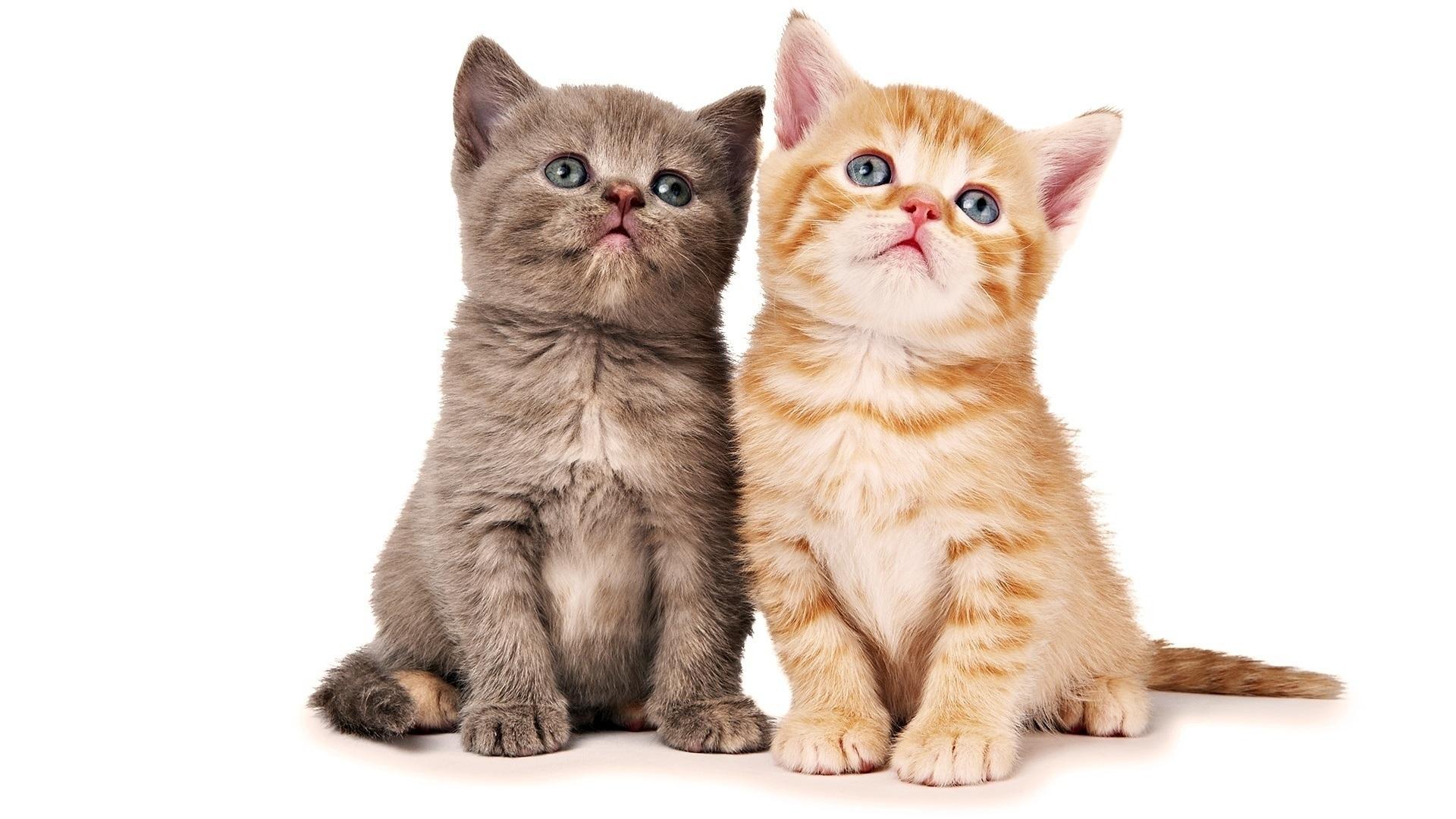 Koty, kotki, kocięta