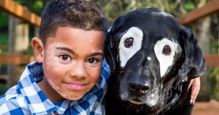 Bielactwo nabyte (Vitiligo) u zwierząt