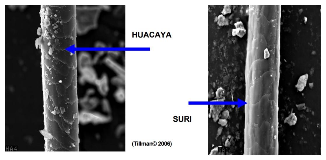włos suri i huacaya