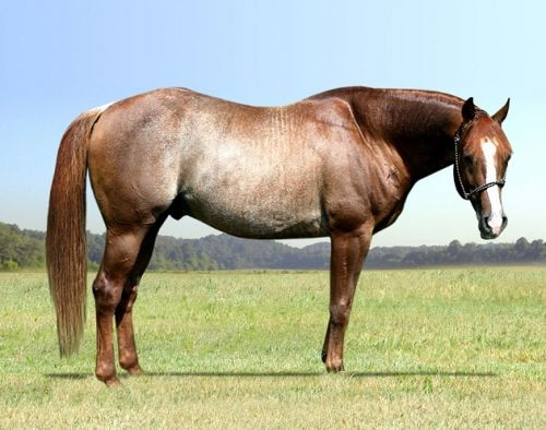 rabciano (perfecthorseauctions.com)